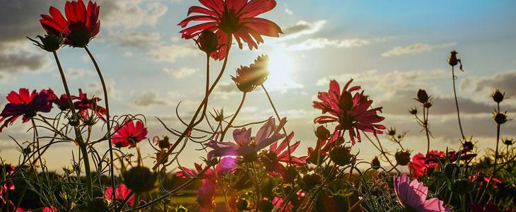 Jardin Fleuri au Printemps - Quelles Plantes choisir - Comment les Entretenir