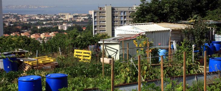 Risques des Potagers Urbains - Pollution et Culture des Légumes en Ville
