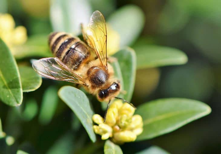 abeille abris pour insectes