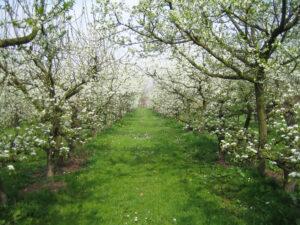 arbustes à planter en juin