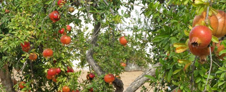 fertilisation bio des fruitiers