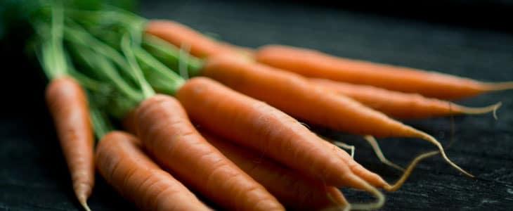 carotte primeur