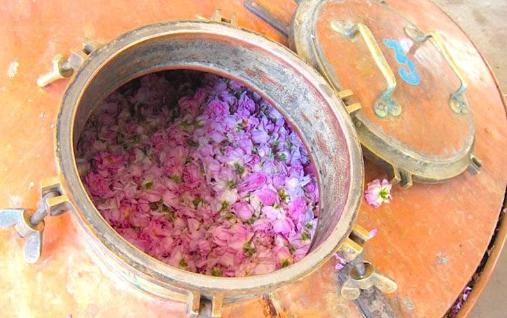 plantes pour parfumeurs