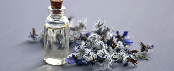 plantes des parfumeurs