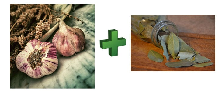 Purin d'ail et Laurier - Préparation Purin d'ail et Laurier-Sauce