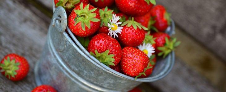 10 meilleures variétés de fraisiers à cultiver