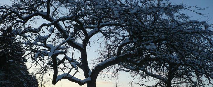 travaux à faire au verger en hiver