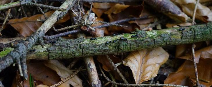 Bois Mort dans nos Jardins - Vivent dans les Arbres Morts