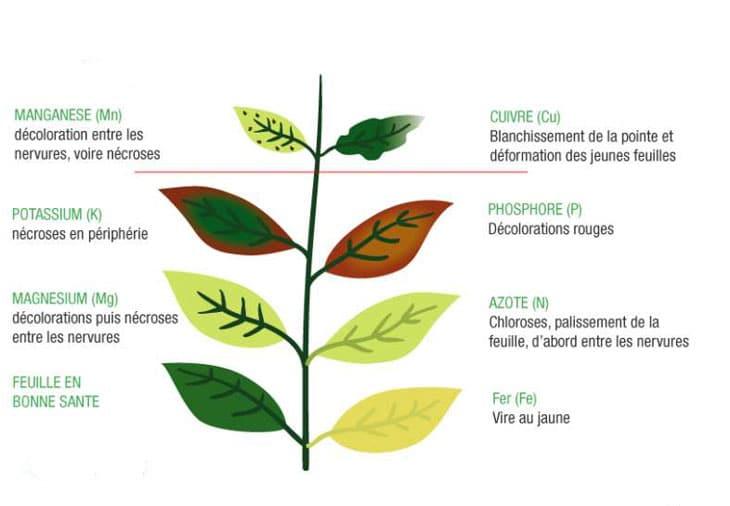 Carences des plantes