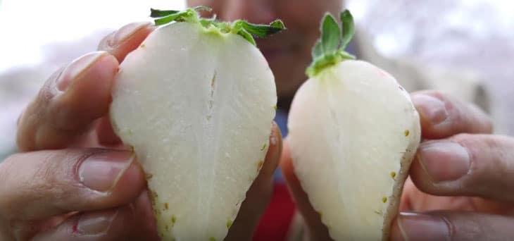 fraise blanche coupée en deux