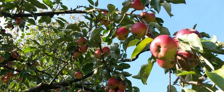 améliorer la qualité des fruits