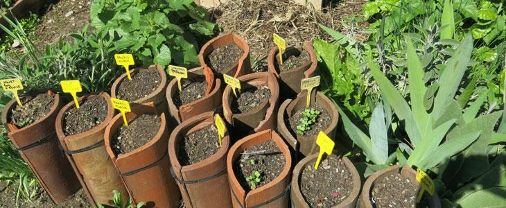 Recycler des Tuiles pour Cultiver des Légumes Racines