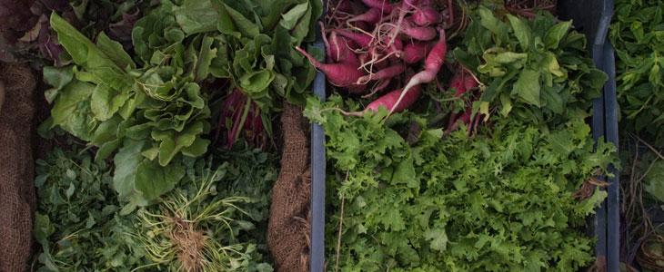 type de sol pour les légumes