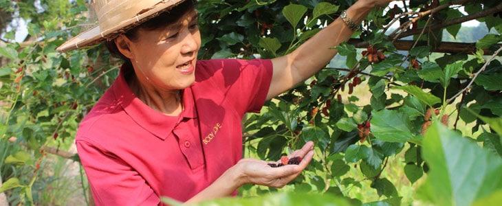 Soins des Fruitiers en été - Travaux au Verger en été