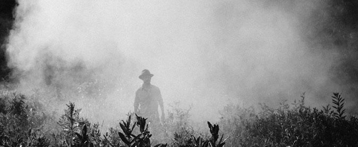 2019 : Arrêt des pesticides pour usage personnel