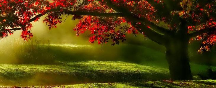 Arbres pour Avoir de l'Ombre en été - Jardin Ombragé