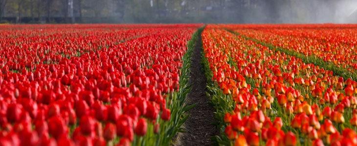 Massif de Fleurs Rouge écarlate - Jardin Lumineux de l'été à l'automne