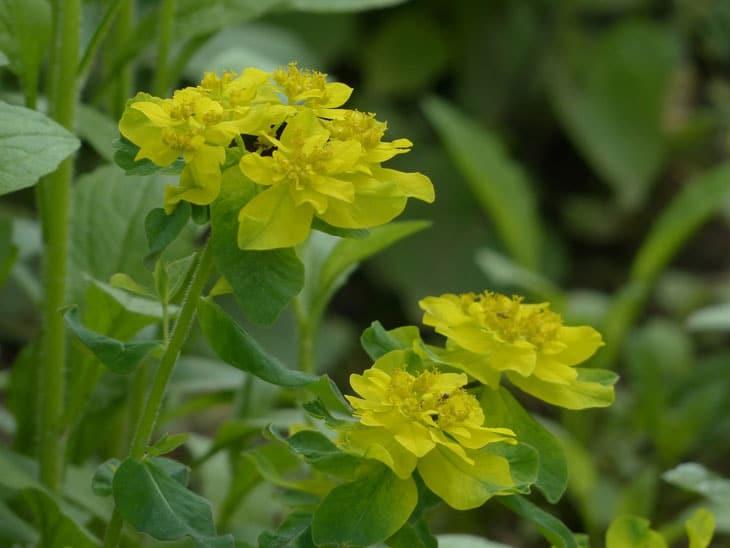 Plantes et Fleurs Résistantes aux Intempéries