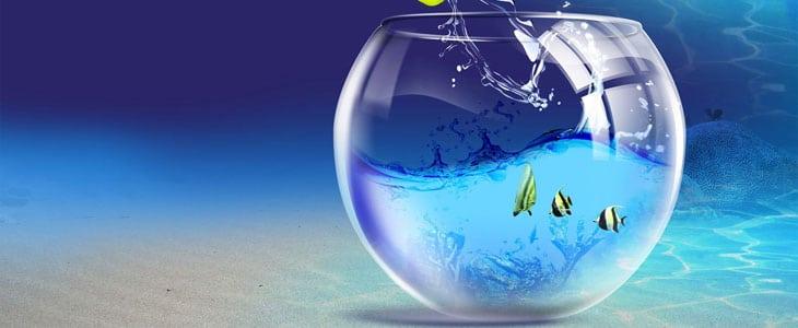 Arroser les Plantes d'intérieur avec l'eau de l'aquarium