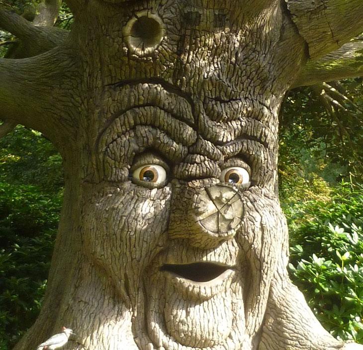 La communication entre les arbres