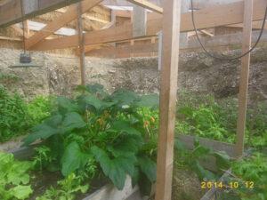culture de fruits et légumes dans la serre enterrée