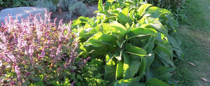 Plantes Médicinales - Créer un Jardin de Plantes Médicinales