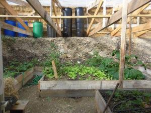 plantation dans la serre enterrée