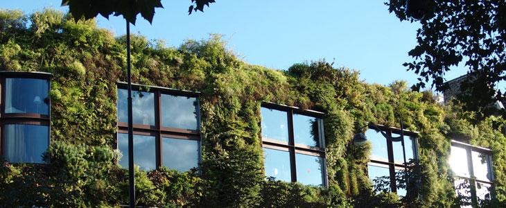 murs végétaux entretenir un mur végétal