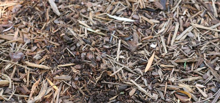 paillage ne pas travailler le sol