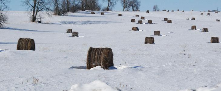 paillage en hiver