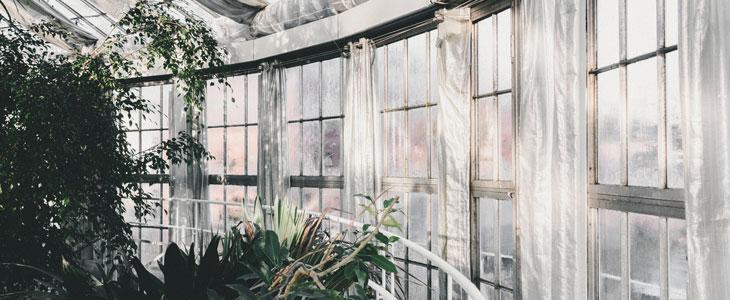 plantes d'intérieur en hiver - entretien des plantes d'intérieur en hiver