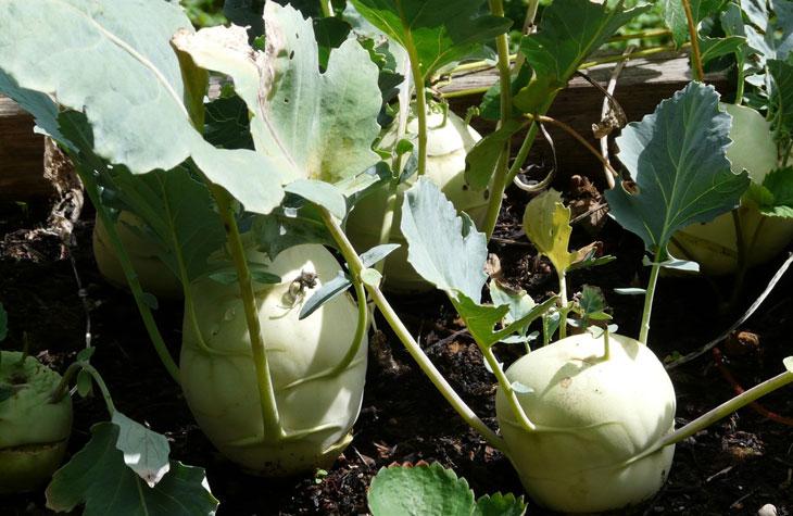 légumes en hiver : quels légumes cultiver en hiver
