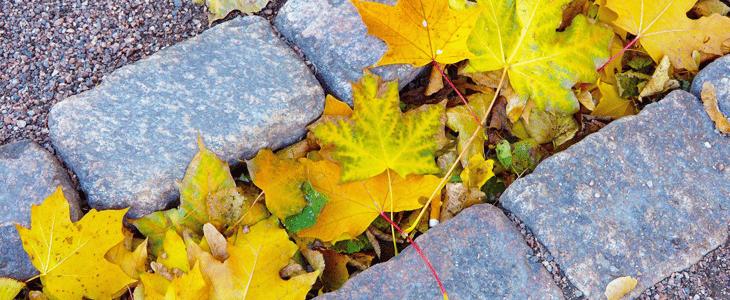 feuilles jaunes - causes des feuilles jaunes