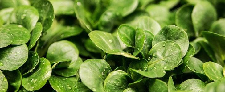 légumes qui peuvent rester en terre en hiver