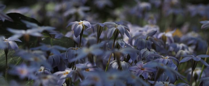plantes qui ne se taillent pas en hiver