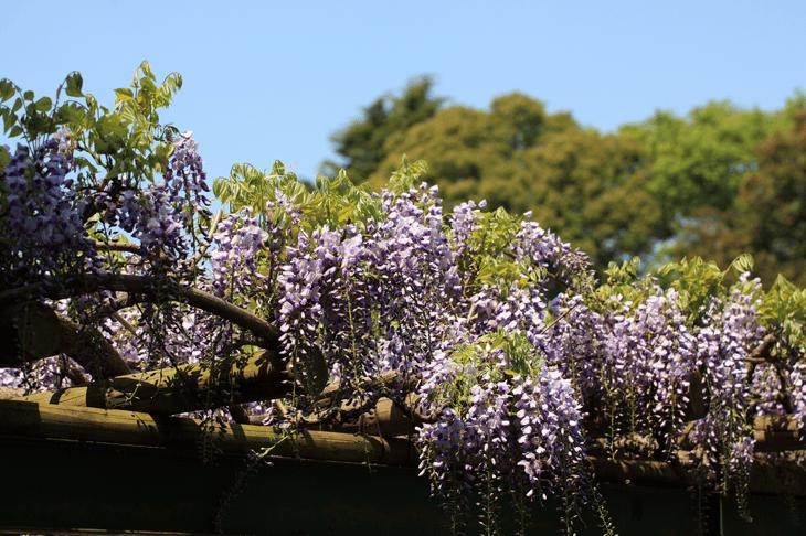 plantes mellifères au printemps