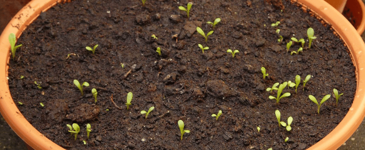 semis en avril