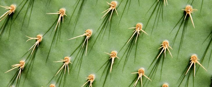 succulentes-cactus