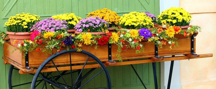 potées fleuries pour l'automne