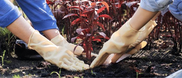 apprenti paysagiste jardinier