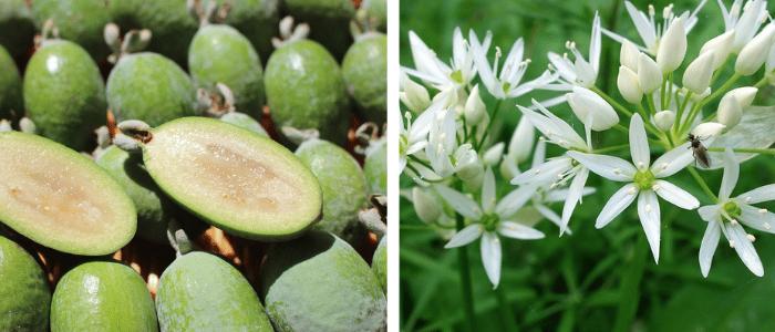 Plantes ornementales et comestibles tendances 2021