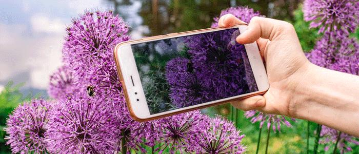 application reconnaitre plantes