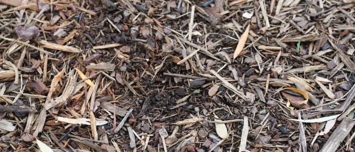 Paillage du sol pour limiter la consommation d'eau