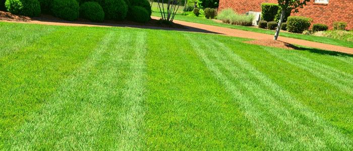 sap-jardinier-tonte-pelouse