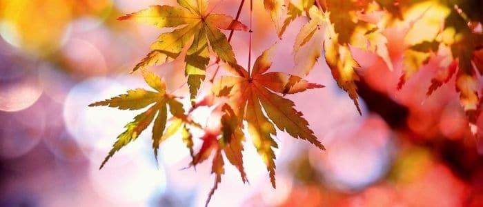 Feuilles-mortes-automne-jardin